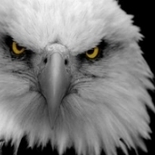 Eaglechallenge